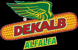Dekalb Alfalfa